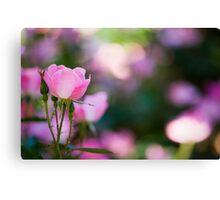 Pink Rose Bush Canvas Print