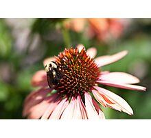 Worker Bee Photographic Print