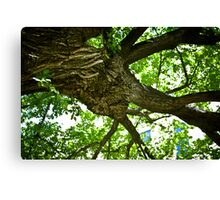 Eternal Tree Canvas Print