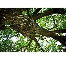 Eternal Tree Photographic Print
