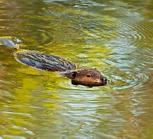 Busy Beaver by Kathy Weaver