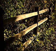 Mysterious Fence by Sharlene Rens