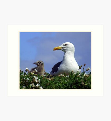 Herring Gull and Chick Art Print