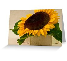 Short Petaled Sunflower In Star Box Greeting Card