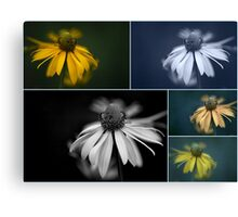 coneflower collage Canvas Print
