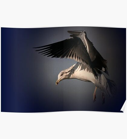 The Herring Gull Poster