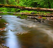 Stream Flows Under the Fallen by Jeff McArthur