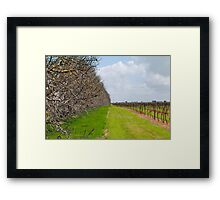 The Vineyard - Naracoorte, South Australia Framed Print