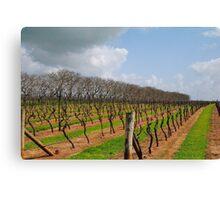Vineyard in Autumn - Naracoorte, South Australia Canvas Print