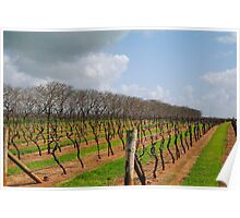 Vineyard in Autumn - Naracoorte, South Australia Poster