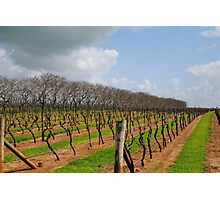Vineyard in Autumn - Naracoorte, South Australia Photographic Print