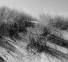 Coastal Grass by Paul Berry