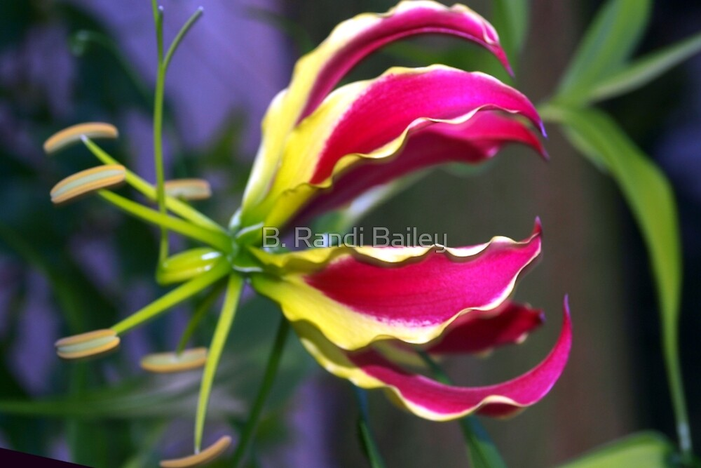 Gloriosa lily by ♥⊱ B. Randi Bailey