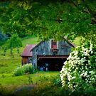 Summer Views of a New Hampshire Barn by Monica M. Scanlan