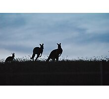 Kangaroos moving through the sunset - Whittlesea, Victoria Photographic Print
