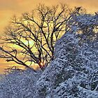 Sunrise After the Snow by Harlan Mayor