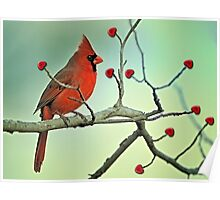 Happy Valentine Day Cardinal Poster
