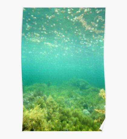 Marino Rocks Reef Poster