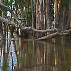 Flooding at Railway Creek by Katrina Freckleton