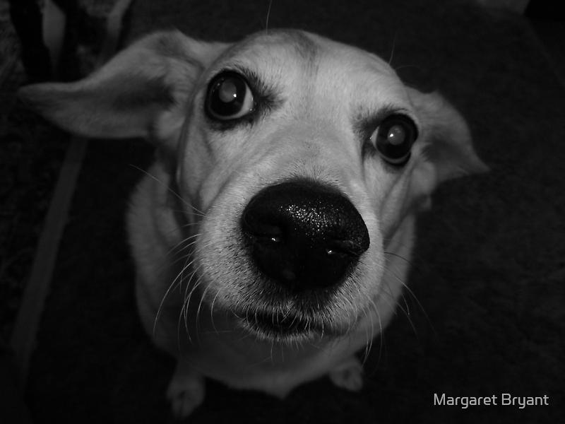 HoundDawg by Margaret Bryant