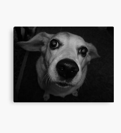 HoundDawg Canvas Print