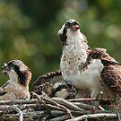 In The Nest by Bill Maynard