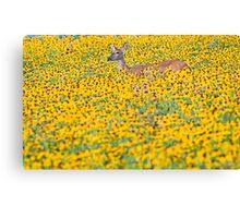 Deer in a Field of Wildflowers Canvas Print