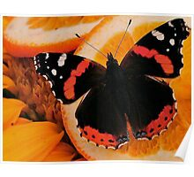 BUTTERFLY  COLLECTION...K Poster