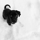 Cinder in the Snow by Lori Deiter