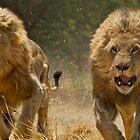 Feeding of the Lions by Daniel Mulcahy