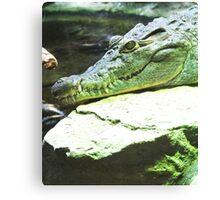 Smiling crocodile Canvas Print