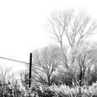 Winter Wonderland by Katie WIsniewski
