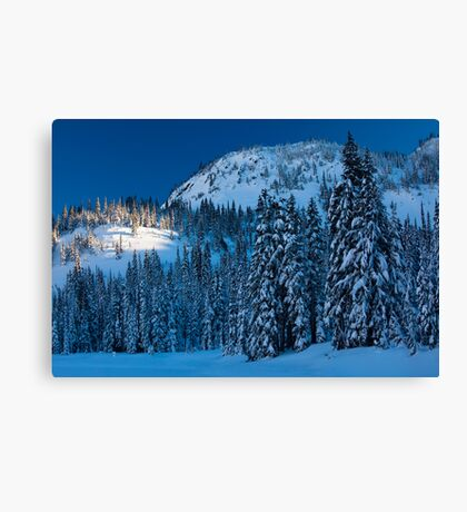 Silent Trees Canvas Print