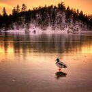 Cold Duck by Bob Larson