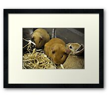 The Bunny And The Hamster Framed Print