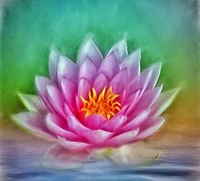 Lotus Flower by Gypsykiss