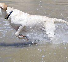 Splash ! by Brian Edworthy