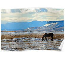 Horse at Square Butte, Montana horse in winter. Poster