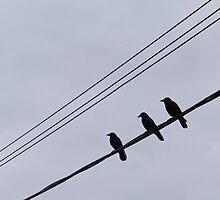 3 blackbirds by Jessica Melanson