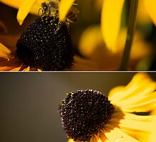 Black Eyes and Bees Diptych by Lisa Knechtel
