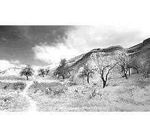 Ten Trees and a Path Photographic Print