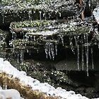 Moss Frozen in Time by Geno Rugh