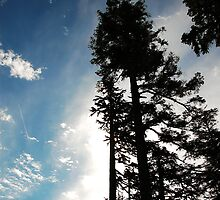 Reaching for the sky by Bob Shupe