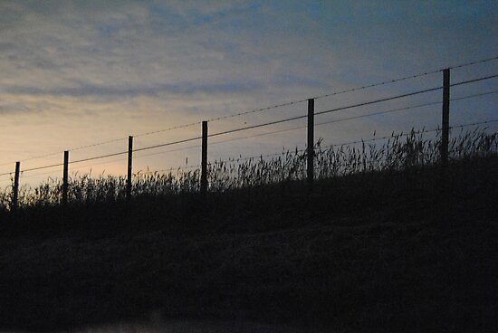 Silouette of fenceline and grass at sunset - Whittlesea, Victoria by Heather Samsa