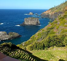 Wild and windy Coastline Norfolk Island by sandysartstudio