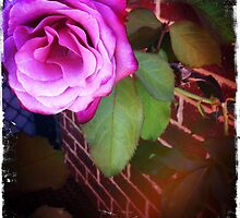 Pink Rose - iPhone by TeAnne
