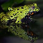 Fire-bellied toad by kilmann