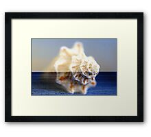shEll oF St. croiX Framed Print