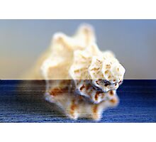 shEll oF St. croiX Photographic Print