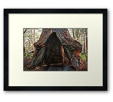 Old Tingle Tree base Framed Print